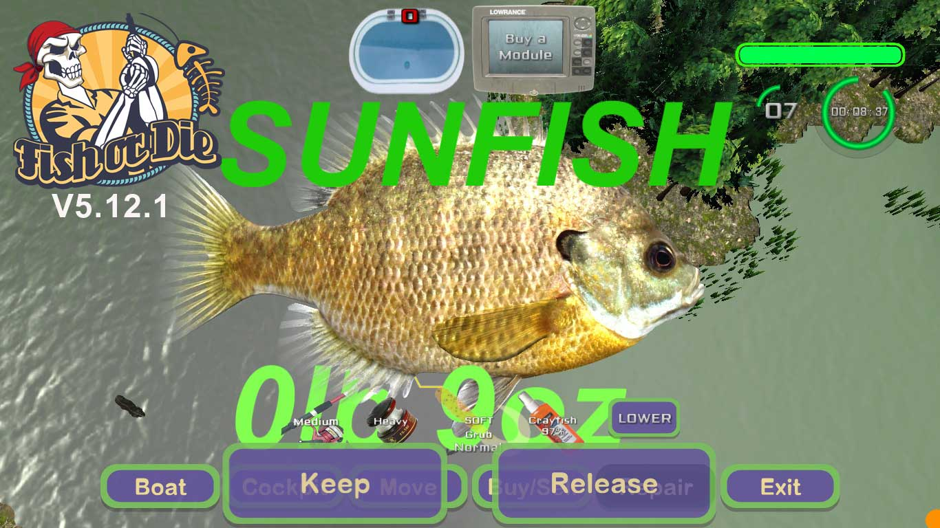 catch sunfish